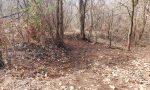 Pianbosco: missione quasi compiuta, il bosco torna a splendere