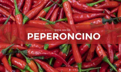 Tutti ortisti: in edicola con La Settimana di Saronno i semi di peperoncino