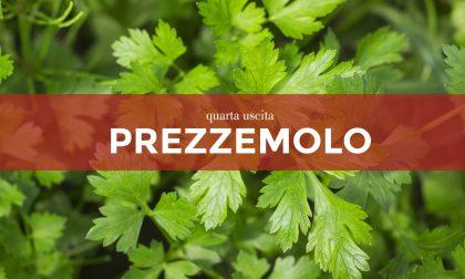 In regalo con La Settimana di Saronno i semi di prezzemolo