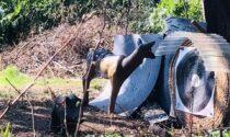 Turate, gli animalisti contro l'area di tiro con l'arco con le sagome degli animali