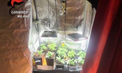 Coltivava marijuana in casa: 18enne arrestato