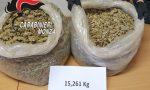 Quindici chili di marijuana sotto un albero di un parco a Misinto