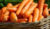In regalo con La Settimana di Saronno i semi di carota