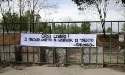 """""""Orsi liberi in Trentino"""": striscione animalista sulla Sp 527"""