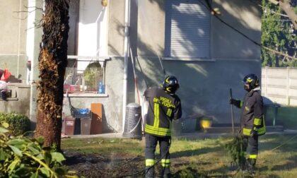 Albero in fiamme a Olgiate Olona, intervento dei Vigili del Fuoco