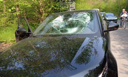 Cislago, auto si schianta contro un daino: animale deceduto sul colpo
