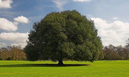 134mila euro per i 262 alberi monumentali della Lombardia