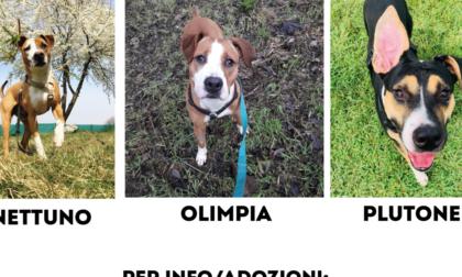 Otto cani in cerca di nuove famiglie a Cogliate
