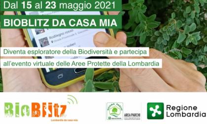 Bioblitz Lombardia partecipa anche il Parco Lura