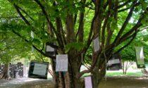 """""""Io albero"""" la mostra al parco dei frati di Saronno"""