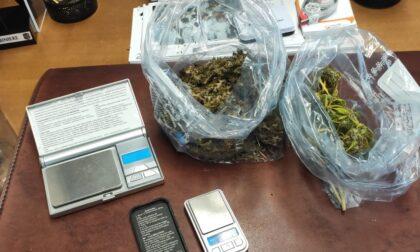Produzione e spaccio di marijuana: in casa 12 piante e 250 grammi di stupefacente