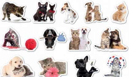 Da oggi originali stickers in regalo con La Settimana di Saronno