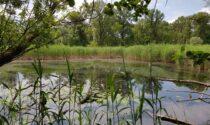 Giornata Mondiale dell'Ambiente, i tre Parchi della provincia in visita all'Oasi di Angera
