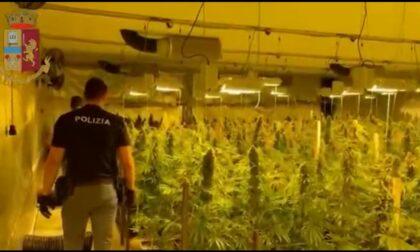 Maxisequestro a Buscate, oltre mille piantine e 45kg di marijuana. Banda di albanesi in manette
