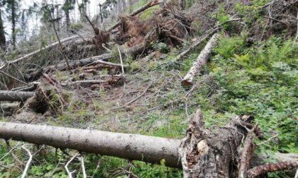 Tempesta Vaia 2018, altri 895mila euro per la Provincia di Varese