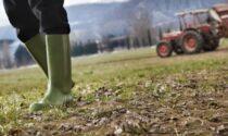 """L'assessore Rolfi contro il Reddito di Cittadinanza: """"Preferiscono prendere quello che lavorare nei campi"""""""