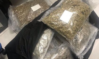 """Beccato con un chilo di """"Amnesia Haze"""", nel casolare altri 25kg di hashish e marijuana"""