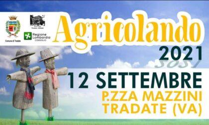 """Domenica la """"mini-Zootecnica"""": in piazza Mazzini arriva Agricolando"""