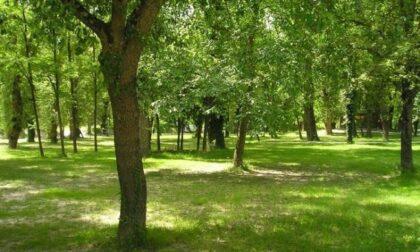 Forestami, anche il Comune di Legnano si impegna ad aumentare il verde urbano