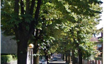 """""""Il rifacimento della fogna in via Dante non intaccò il viale. Si possono salvare gli alberi, basta volerlo"""""""