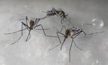 Nessuna pace, nemmeno d'inverno: la zanzara coreana sempre più diffusa