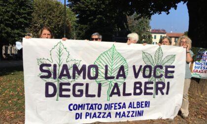 """Perizia Zanzi consegnata: """"Smentita la relazione del Comune, nessuna criticità per la sicurezza"""""""